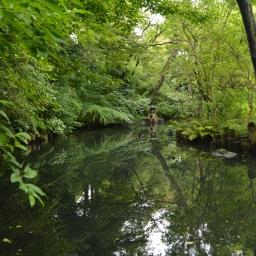 A Tour Through Tokyo Via Haiku: The Metro, The Fish Market, and the Gardens