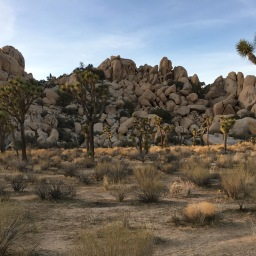 The Magic of the Mojave